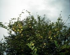 ncallesen.æbler.2006.enkelt